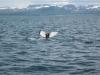 Walbeobachtungsfahrt<br>Bild: Flavian Imlig